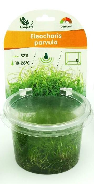 ELEOCHARIS PARVULA/ACICULARIS TERRINA 100 ML