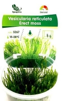 ERECT MOSS TERRINA 100 ML