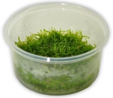 TAXIPHYLLUM BARBIERI TERRINA 100 ML